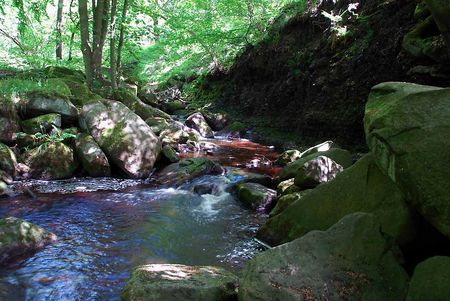 Padley Gorge