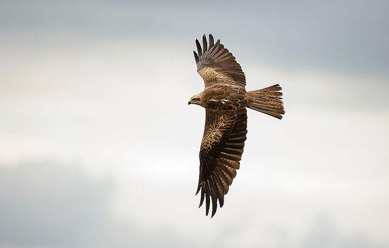 bird-of-prey-photography
